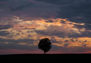 landscape Madison Nature Sunset Tree Wisconsin