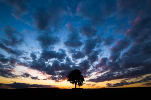 Clouds landscape Nature Sunset Tree Wisconsin