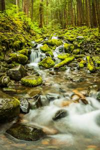 forest green long exposure Nature Olympic National Park Sol Duc Falls Washington Waterfall